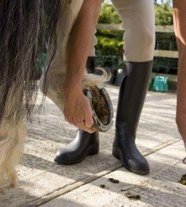 Conocé todo Cómo puedes ser lastimado por un caballo