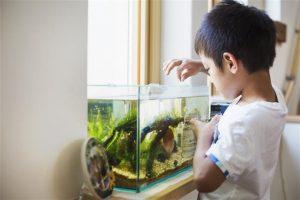 Conocé todo ¿Con qué frecuencia debo alimentar a mis peces de acuario de agua salada ?