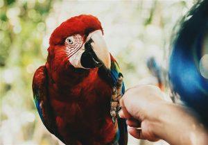 Conocé todo Top 5 especies de aves entrenables como mascotas