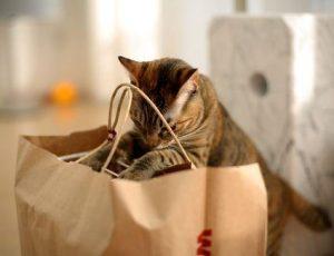 Conocé todo Lista de compras para su nuevo gato