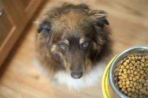 Conocé todo Alimento para perros sin granos y enfermedades del corazón