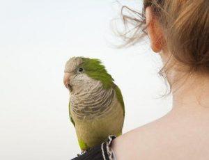 Conocé todo ¿Puede mi pájaro enfermarme ?