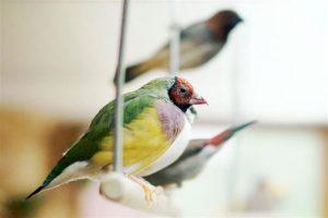 Conocé todo 5 mejores aves para propietarios ocupados