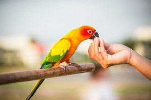 Conocé todo Manteniendo aves silvestres como mascotas