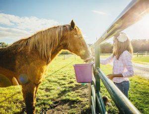 Conocé todo Doce maneras en que su caballo le está diciendo que necesita que le revisen los dientes