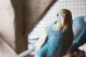 Conocé todo ¿Por qué los pájaros hacen mascotas perfectas ?