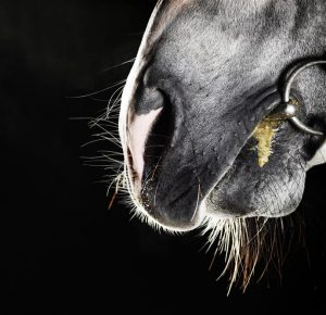 Conocé todo Cómo encajar la broca de tu caballo