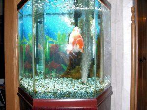 Conocé todo ¿El ancho del tanque de acuario es importante ?