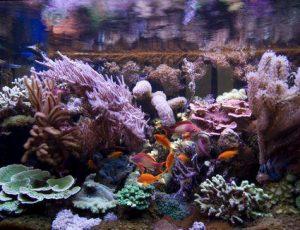 Conocé todo Índice de galerías de fotos de tanques de arrecife