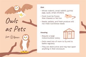 Conocé todo ¿Los búhos son buenas mascotas ?