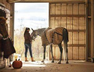Conocé todo Errores que la gente comete al comprar un primer caballo