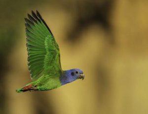 Conocé todo La especie de pájaro más suave para mascotas