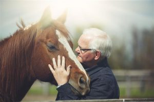 Conocé todo ¿Cuánto tiempo viven los caballos ?