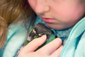 Conocé todo ¿Debe usted comprar a su hijo un pájaro mascota ?