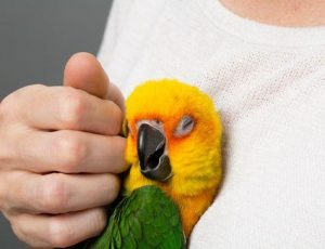 Conocé todo Elegir el pájaro mascota correcto para ti