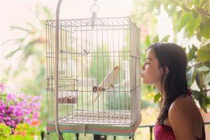 Conocé todo ¿Puede un pájaro tener de género ?